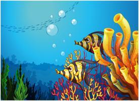 Een diepe zee met prachtige koraalriffen en vissen