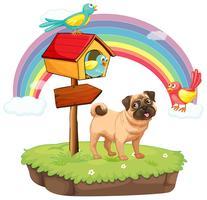 Hond en regenboog