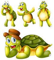 Vier speelse schildpadden