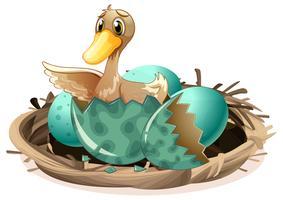 Lelijk eendje uitbroedend ei in nest