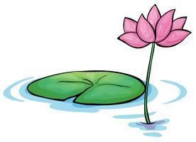 Een waterleliebloem vector