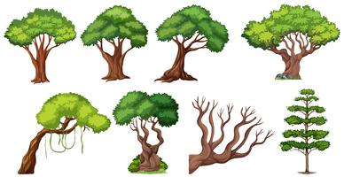Set van verschillende boom vector