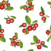 Cranberry zomer naadloze patroon. Berry achtergrond. Bloemen ornament vector