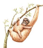 Aquarel luiheid en baby hangen op tak.