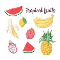 Set cocktailijs en tropisch fruit. Vector illustratie