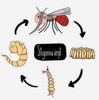 Leuke case study van de cartoon-stijl van de levenscyclus van muggen. vector