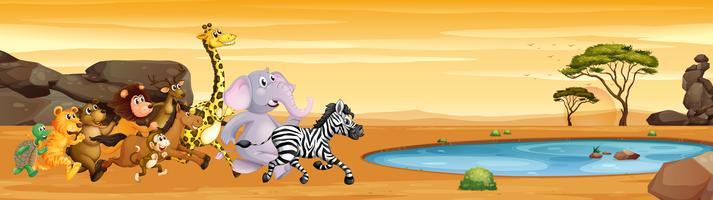 Wilde dieren rennen naar de vijver