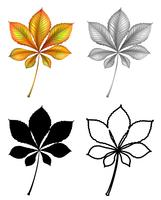Set van plant Leaf vector