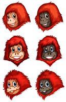 Hoofden van chimpansees vector