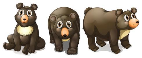 Zwarte beren vector
