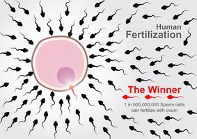 Menselijke bevruchting. 500.000.000 spermacellen racen om te bevruchten met eicel, maar 1 op 500.000.000 spermacellen kunnen de bevruchting voltooien.