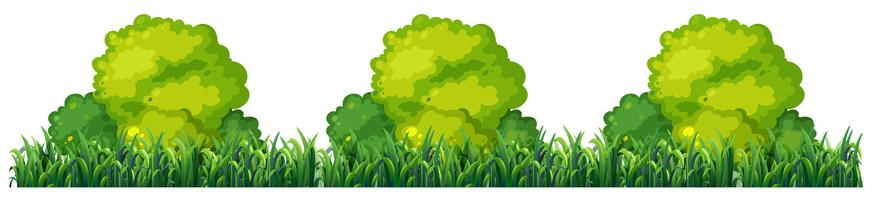 Isplated plant bush op witte achtergrond vector