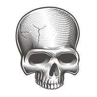 Vectorillustratie van een deel van de schedel vector