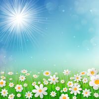 De lenteachtergrond met witte bloemen in het gras.