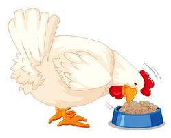 Een kip die voedsel eet
