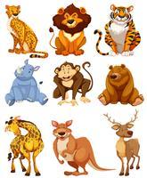 Set van wilde dieren karakter vector