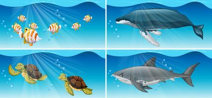 Onderwater scènes met zeedieren vector