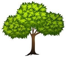 Een boom op whote achtergrond