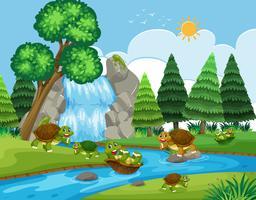 Schildpad die in rivier speelt
