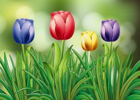 Kleurrijke tulpenbloemen in tuin vector
