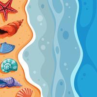 Achtergrondscène met zeeschelpen op strand