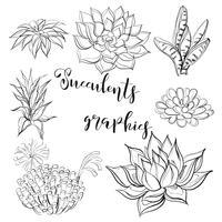 Vetplanten. Graphics. Kleurboek. Zwart. Vector illustratie.
