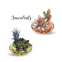 Vetplanten in glazen aquaria. Gekleurd zand. Decoratieve bloemsamenstellingen. Graphics. Waterverf. Vector.
