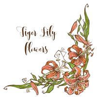 Frame - hoek met tijger Lily bloemen. Vector illustratie.