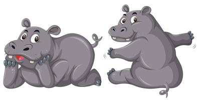 Twee schattige nijlpaarden op witte achtergrond