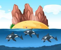 Drie dolfijnen zwemmen onder water vector