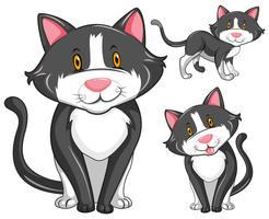 Kat in drie verschillende posities