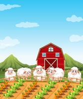 Schapen in de landbouwgrond vector