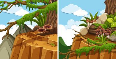 Scènes met bomen op de klif