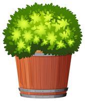 Een plant in de pot