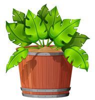 Geïsoleerde plant in de pot