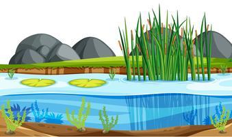 Een natuur vijverlandschap vector