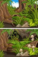 Bosgezichten met paddenstoelen en varens