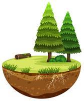 Een rond boslandschap