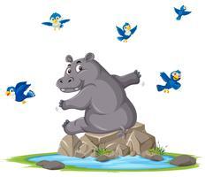 Een nijlpaard naast vijver