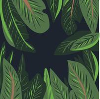 hand getekende aquarel Tropische blad vector
