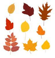 Reeks kleurrijke de herfstbladeren die op witte achtergrond wordt geïsoleerd - Vectorillustratie.