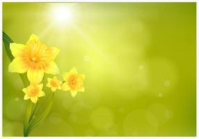 Narcis Achtergrond Vector