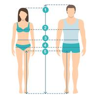 Vectorillustratie van man en vrouwen in volledige lengte met metingslijnen van lichaamsparameters. Man en vrouw maten metingen. Menselijke lichaamsafmetingen en verhoudingen. Plat ontwerp. vector