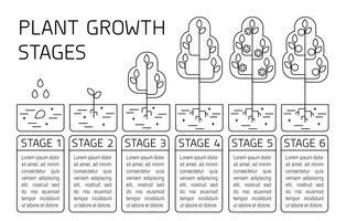 Plantengroeifasen infographics. Lijn kunst pictogrammen. Aanplant instructiesjabloon. Lineaire stijlillustratie die op wit wordt geïsoleerd. Groenten planten, groenten verwerken. vector