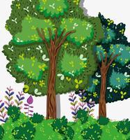 Prachtig boslandschap