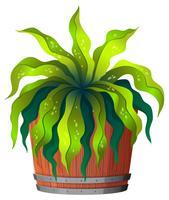 Een groene plant in pot vector