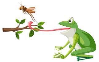 Een kikker probeert sprinkhaan te eten vector