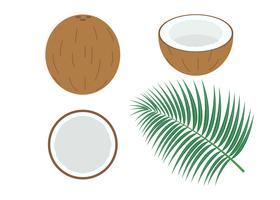 Vector illustratie van de set verse kokosnoot geïsoleerd op een witte achtergrond