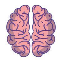 menselijk brein anatomie tot creatief en intellect