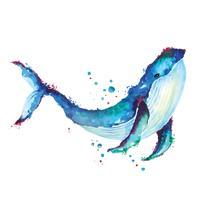 Blauwe vinvis aquarel tekening